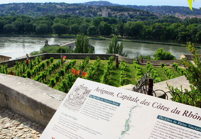 Vignes d'Avignon